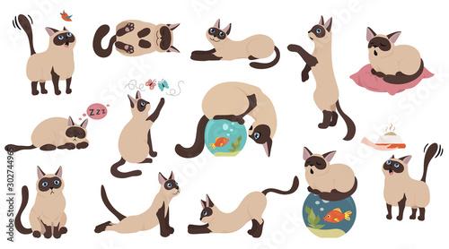 Obraz na płótnie Cartoon cat characters collection