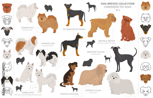 Fotografie, Obraz Companion and miniature toy dogs collection isolated on white