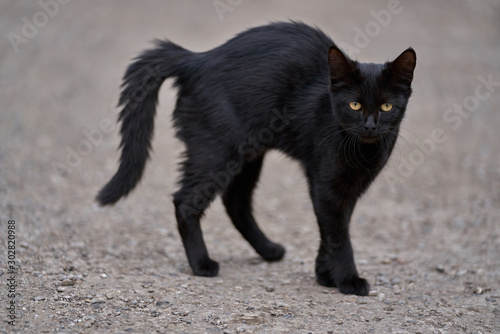 Leinwand Poster Scarried black cat