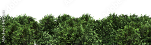 Fotografia, Obraz Green trees isolated on white background Forest and foliage in summer 3d render
