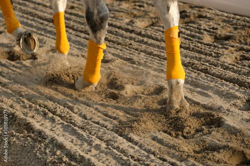 Carta da parati the scene of horse race in Japan