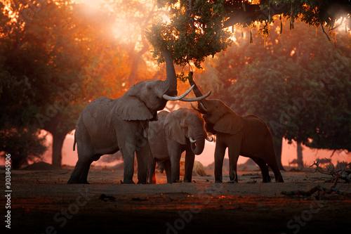 Wallpaper Mural Elephant feeding feeding tree branch