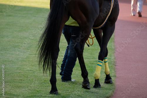 Obraz na płótnie the scene of horse race