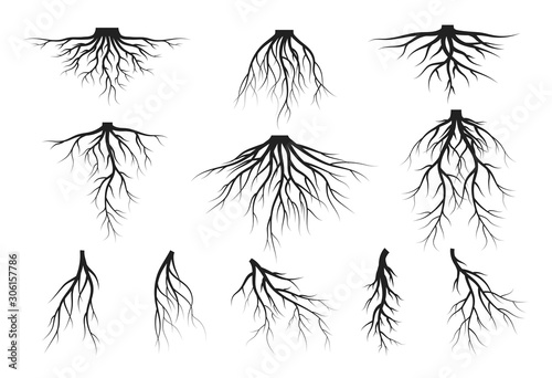 Canvas Print Set of tree roots silhouettes. Vector isolated Illustration.
