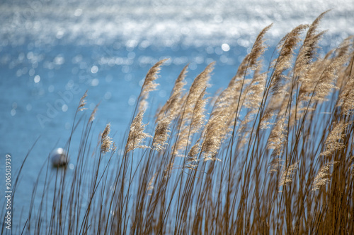 Photo Reeds into the light