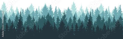 Fotografia Forest background, nature, landscape
