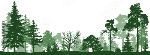 Fotografie, Obraz Tree forest vector silhouette. Isolated set