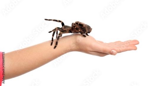 Foto Woman holding striped knee tarantula on white background, closeup