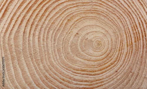 Fotografie, Tablou Cross section of tree trunk background and texture