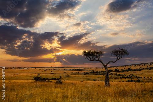 Obraz na plátně Sunset in savannah of Africa with acacia trees, Safari in Serengeti of Tanzania