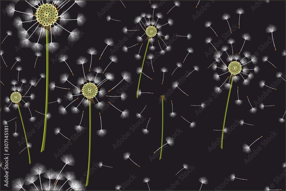 Seamless dandelion pattern on black background. - Vector <span>plik: #307145181   autor: ilhnklv</span>