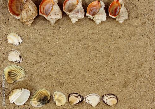Fotografija sea shells