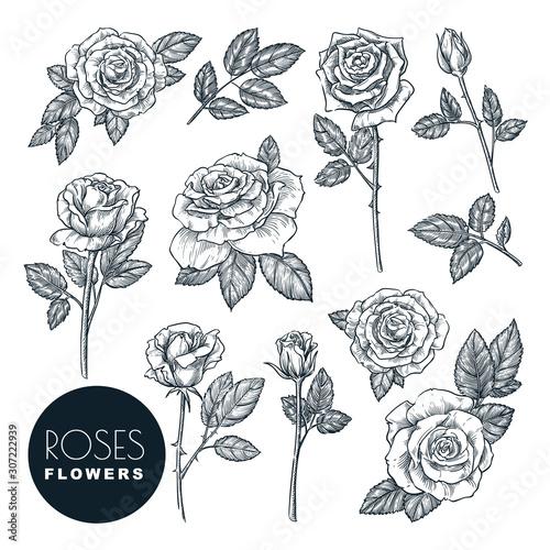 Canvas Print Roses flowers set, vector sketch illustration