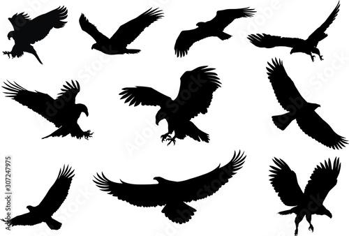 Canvas eagle silhouette, fliying bird silhouette
