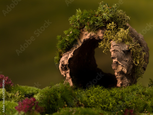 Wallpaper Mural Hollow tree trunk background