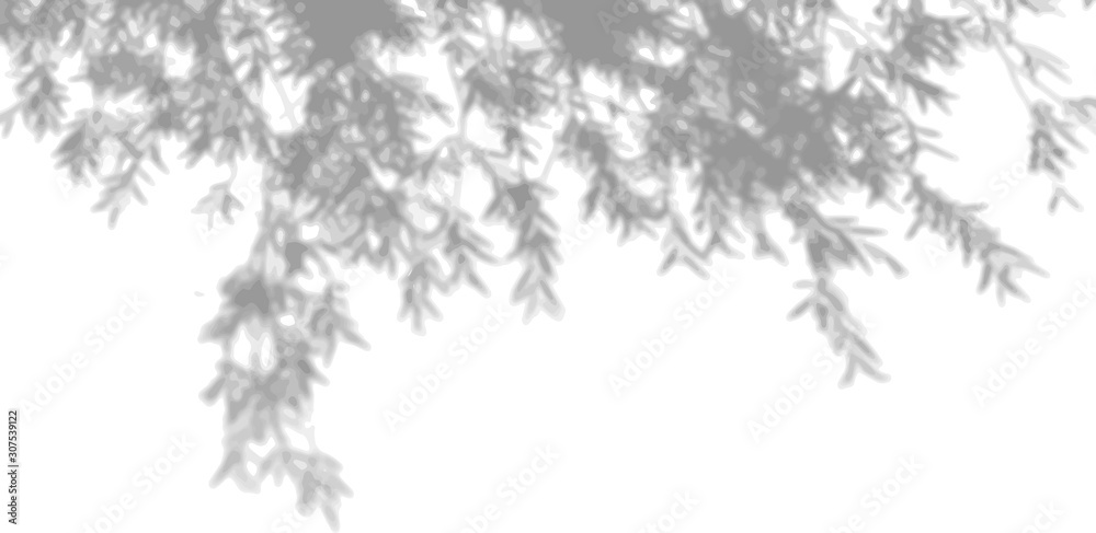 The shade of the exotic plants on the white wall. Tree leaves. Black and white image for photo overlay or mockup <span>plik: #307539122   autor: Natika_art</span>