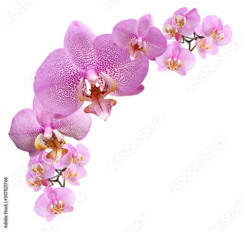 Canvas Print Purple Orchid Vignette