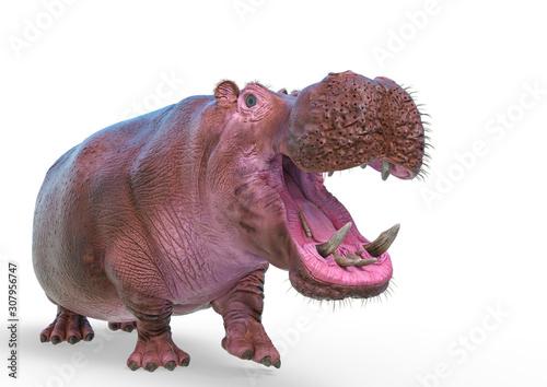 Stampa su Tela hippopotamus in white background