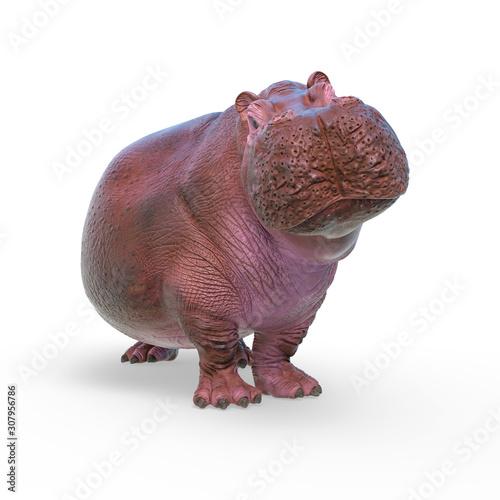 Carta da parati hippopotamus in white background