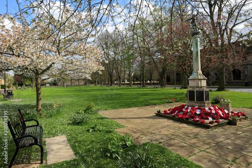 Fotografie, Obraz Spring blossom, War memorial, Ramsey village; Cambridgeshire; England; UK
