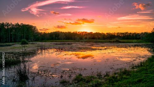 Photo Louisiana swamp sunset and silhouettes
