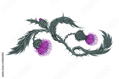 Fototapeta Hand drawn composition of a thistle flower