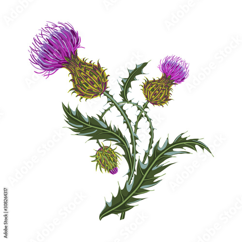 Canvas-taulu Hand drawn composition of a thistle flower