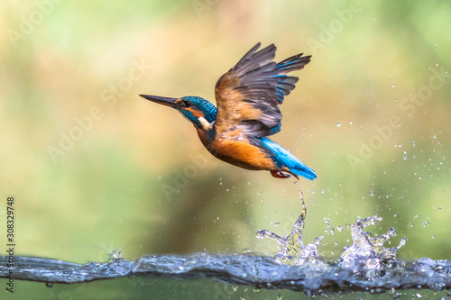 Photo Common European Kingfisher emerging abstract
