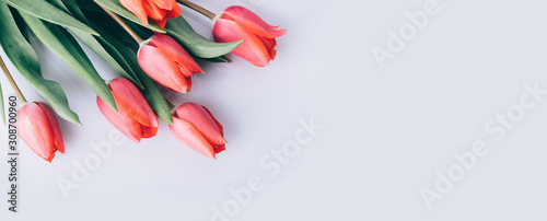 Canvas Print Red tulip flower on natural white background from above