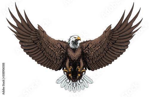 Bald eagle front Tapéta, Fotótapéta
