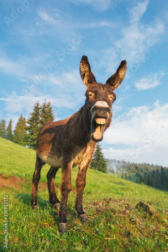 Foto Picture of a funny donkey at sunset.