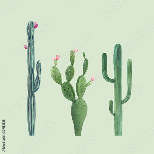 Fototapeta Beautiful three vector watercolor cactus hand drawn illustrations set