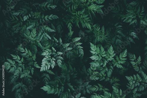Fotografía Green leaves background pattern