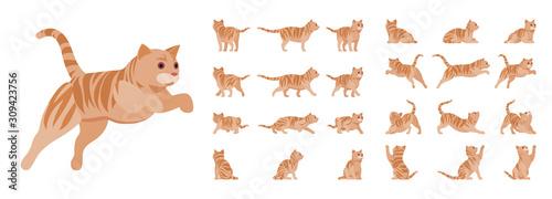 Photo Ginger Tabby Cat set