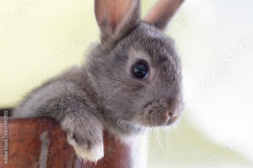 Fotografia Close up of a bunny