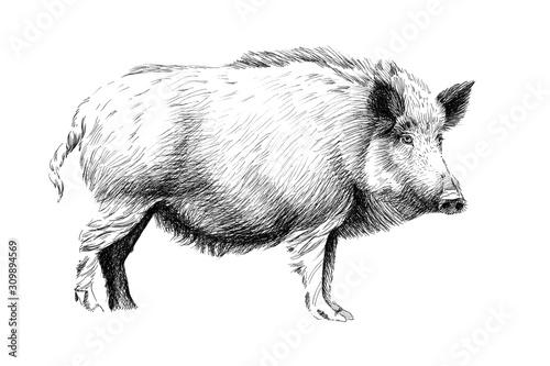 Tableau sur Toile Hand drawn wild boar, sketch graphics monochrome illustration