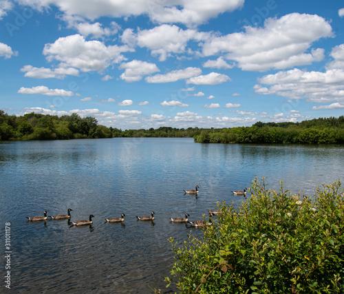 Fotografie, Obraz Gaggle of Geese