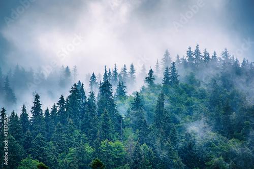 Fototapeta krajobraz górski we mgle
