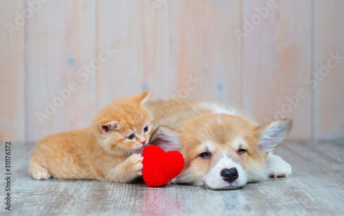 Canvas Print Cat and dog with red heart