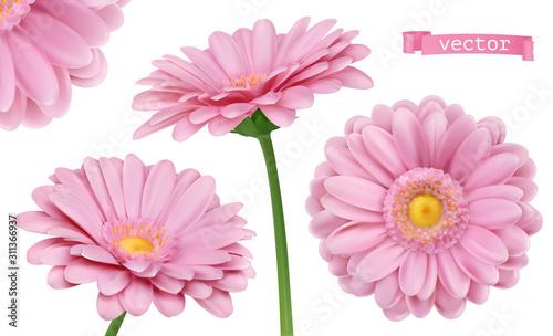 Photographie Pink Dahlia. Chamomile flowers 3d vector realistic set