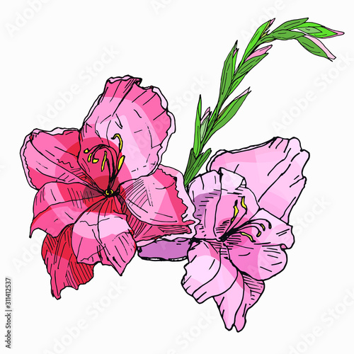 Canvas Print beautiful bouquet of branches of multicolored gladioli, vector isolated image on white background