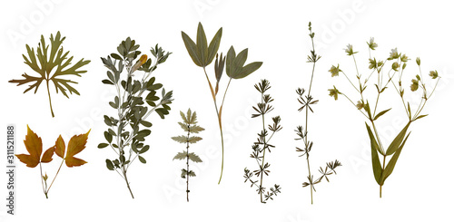 Fototapeta Dry pressed wild flowers and plants isolated on white background