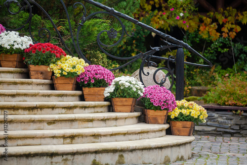 Beautiful chrysanthemum flowers in wooden pots decorate the stairs Fototapet