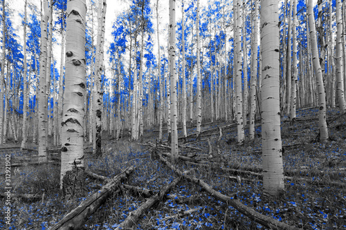 Blue trees in a surreal forest landscape scene