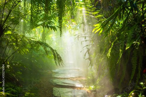 Fotografia The fog in the rain forest and sun ray.