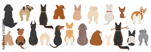 Leinwand Poster Dogs poses behind. Dog`s butts. Flat design clipart