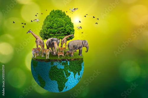 Fotografia Concept Nature reserve conserve Wildlife reserve tiger Deer Global warming Food
