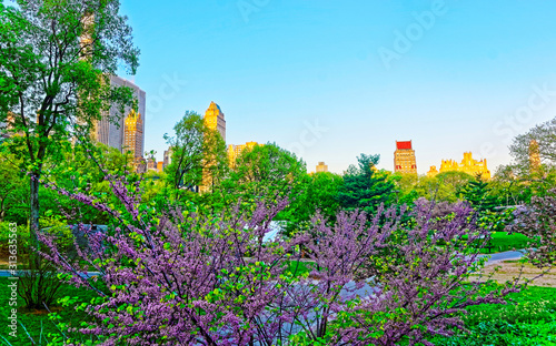 Foto Central park New York, great design for any purposes