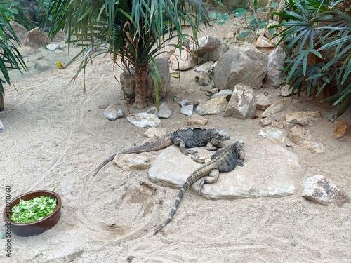 Fotografía Lizards in the aviary of the zoo.