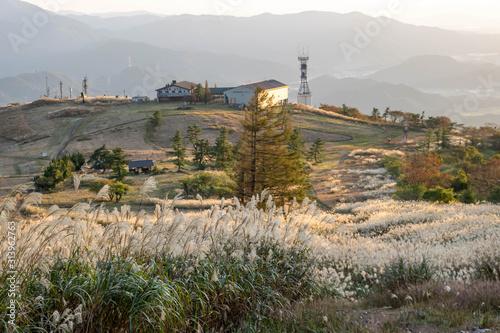 Fototapeta Ibuki Hiking Trail at Sunset, Tall grass swaying in warm autumn wind